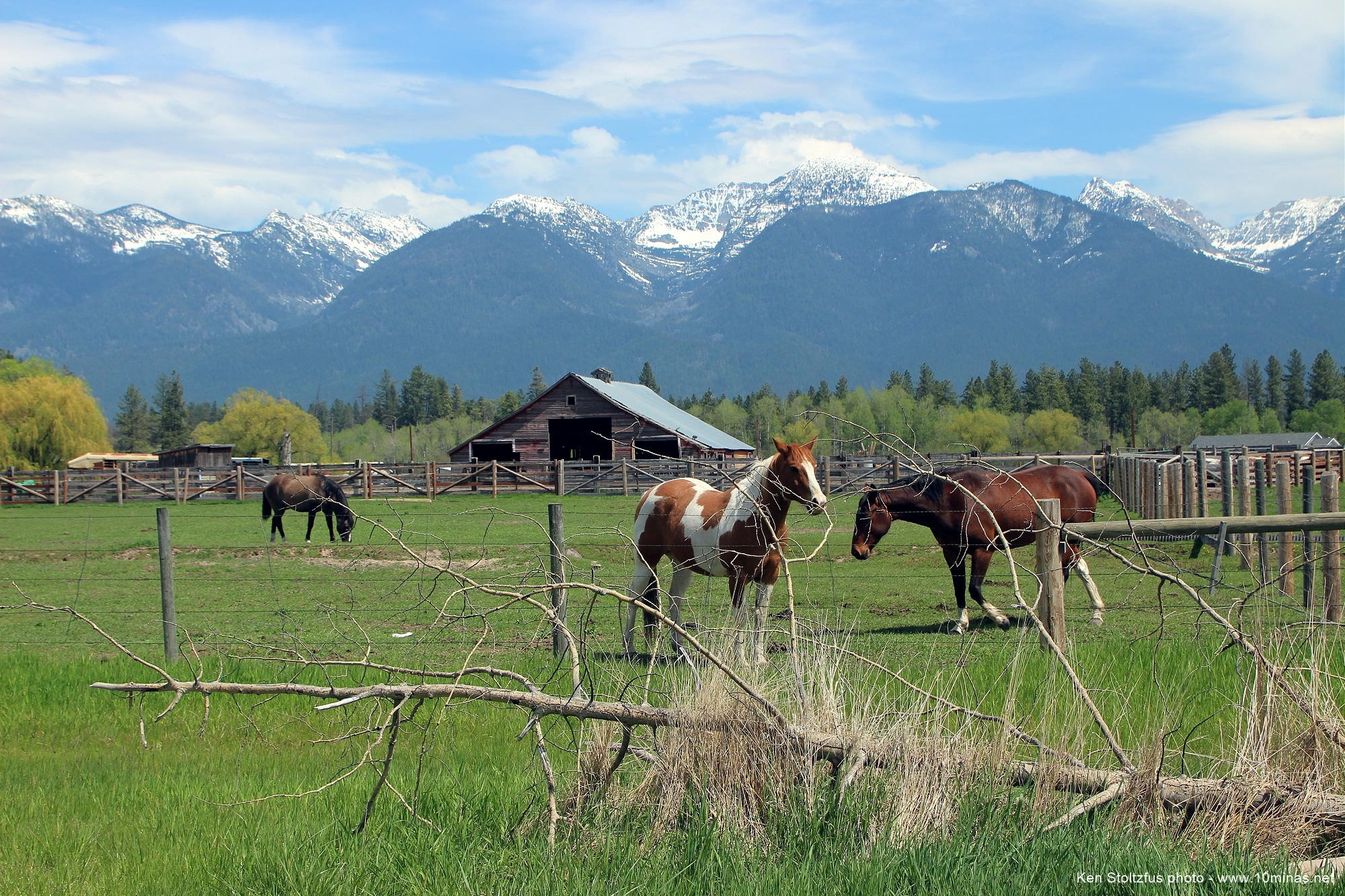 Montana_mountains_Ronan_MT_horses